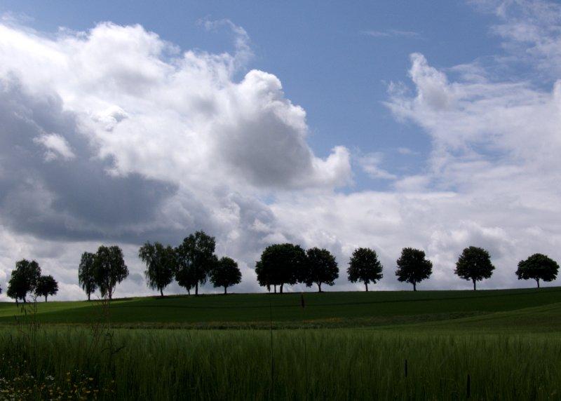 Bäume am Horizont